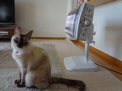 暖房器具はペットにも人気♪